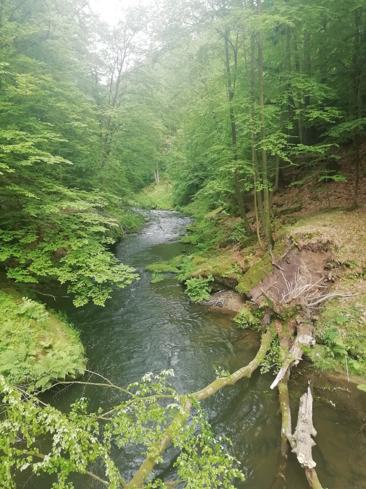 czech-forest