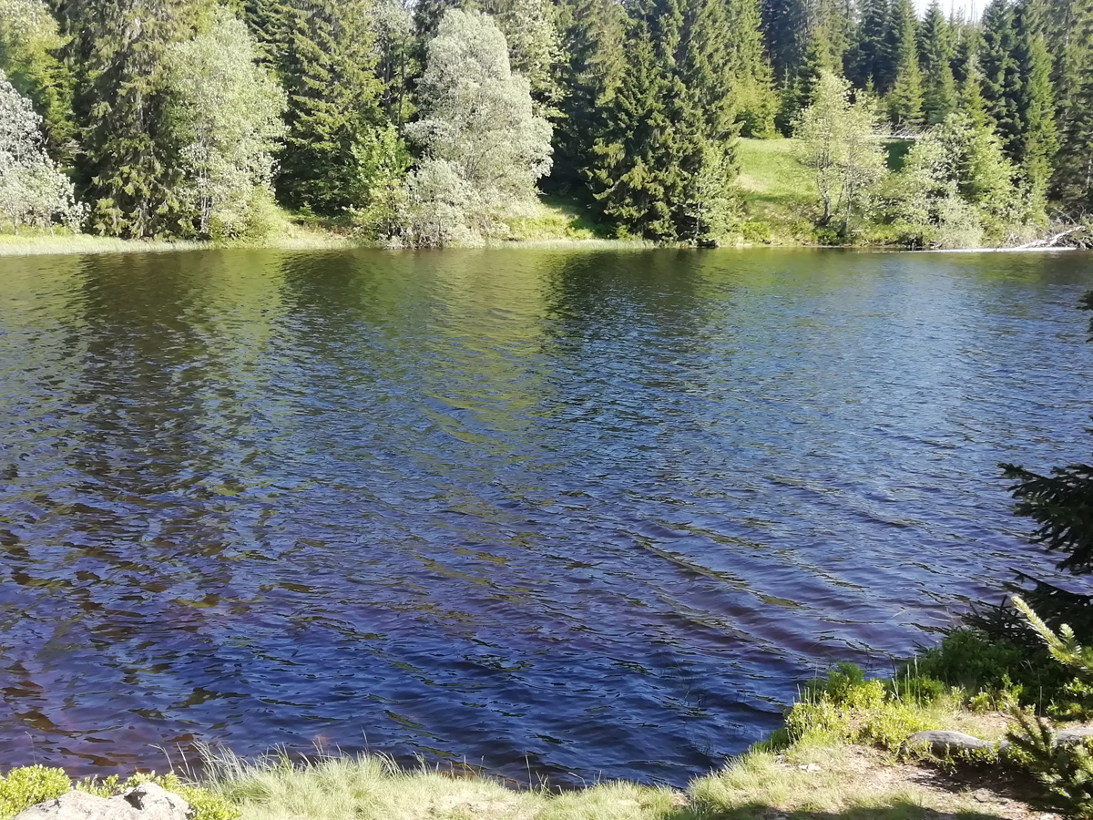lake-Laka-Sumava